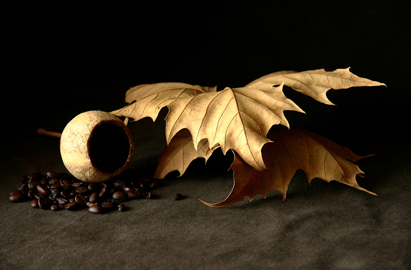Poppy Shell and Coffee Beans